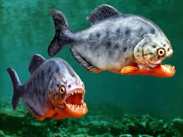 piranhas1